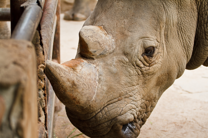 how criminology can fight wildlife poaching